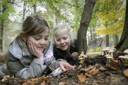 paddenstoelen-kinderen-namo53711